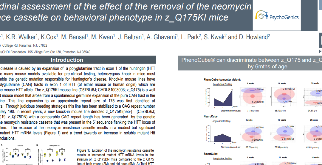 Longitudinal assessment of the effect of removal of the neomycin resistant cassette on behavioral phenotype in z_Q175KI mice